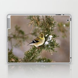 Professor Goldfinch Laptop & iPad Skin