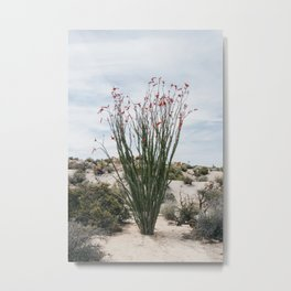 Joshua Tree Ocotillo Metal Print
