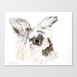 Pixie the Lionhead Rabbit by Teresa Thompson Canvas Print