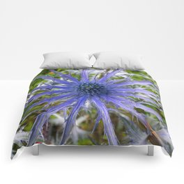 A thistle with style Comforters
