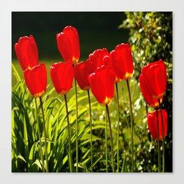 tulip impressions (square) Canvas Print