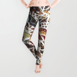 Moths of North America Pattern Leggings