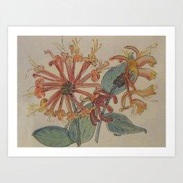 Fragrant Honeysuckle Art Print