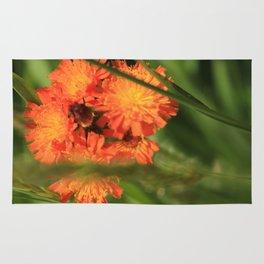 Orange Hawkweed Wildflowers Rug