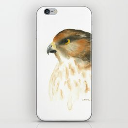 juvenile red-tailed hawk iPhone Skin