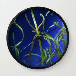 Find the Pipefish Wall Clock