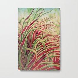 Green & red succulent. Metal Print