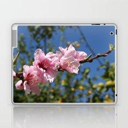 Peach Tree Blossom Against Blue Sky Laptop & iPad Skin