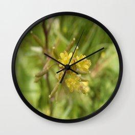Rorippa Palustris Delicate Pale Mustard Flower Wall Clock