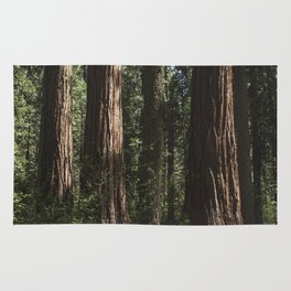 Sunlit California Redwood Forests Rug