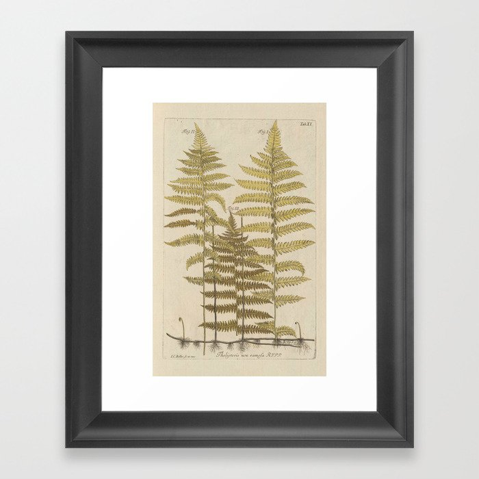 Vintage Fern Botanical Framed Art Print by bluespecsstudio | Society6