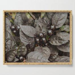 Black Berries Serving Tray