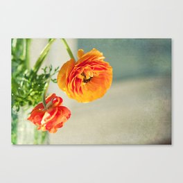 Orange you beautiful Ranculus? Canvas Print
