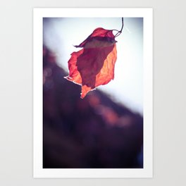 Soft Autumn #5 Art Print