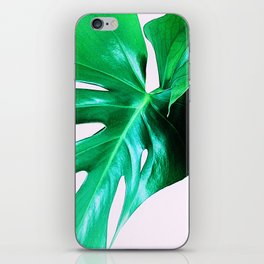 Cheese Plant Leaves iPhone Skin