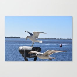 Seagulls in Southport NC Canvas Print