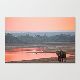 Walk in the evening light, Africa wildlife Canvas Print