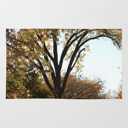 Fall Walk Rug