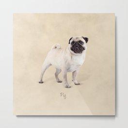 Pug Metal Print