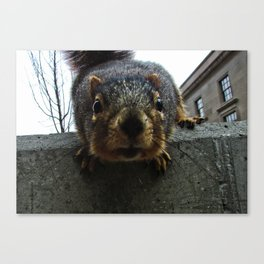 squirrelly Canvas Print