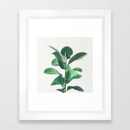 Rubber Fig Framed Art Print