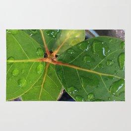 Raindrops on Baby Sea Grape Leaves Rug