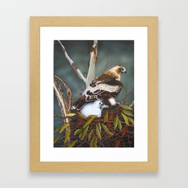 Eagle & chick Framed Art Print