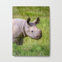 Baby Black Rhino. Metal Print