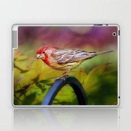 Red Finch Laptop & iPad Skin
