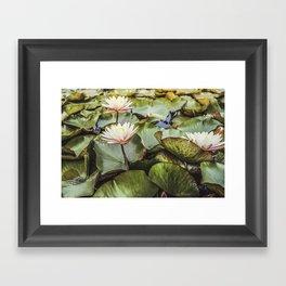 Water Lilies   Landscape   Christmas Framed Art Print