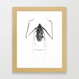 Acrocinus I Framed Art Print
