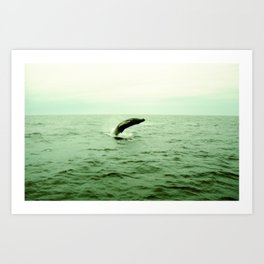 breaching humpback Art Print