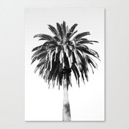 palm vintage black & white Canvas Print