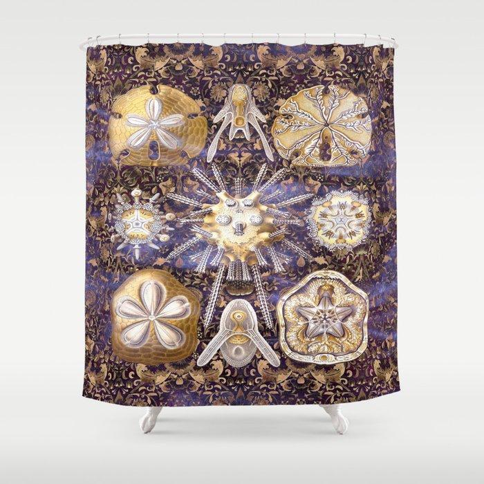 Ernst Haeckel Sand Dollars Shower Curtain