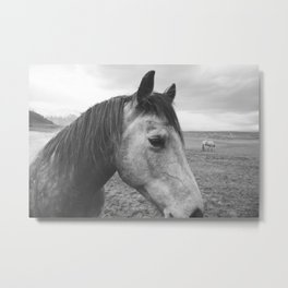 Horse Print in Black and White Metal Print