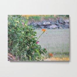 Low Tide Tiger Lillies Metal Print