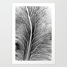Black And White Leaf Art Print