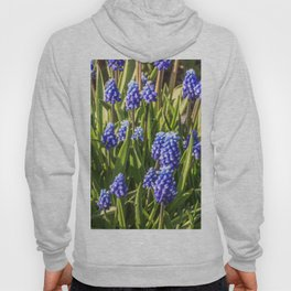 Grape hyacinths muscari Hoody