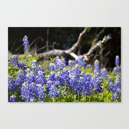 Texas Pride Canvas Print