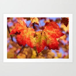Autumn in Canada - Maple leafs Art Print