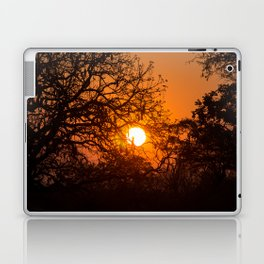 Sultry sun setting behind the sausage tree Laptop & iPad Skin