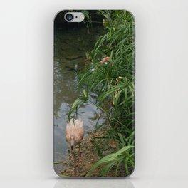 Pink flamingo / Coral flamingo iPhone Skin