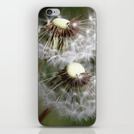 Dandelion 2013 no.6 iPhone Skin