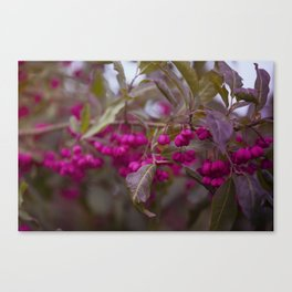 Fruits of Autumn in bold pink Canvas Print