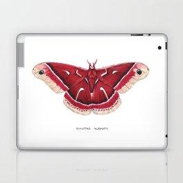 Ceanothus Silkmoth (Hyalophora euryalus) Laptop & iPad Skin