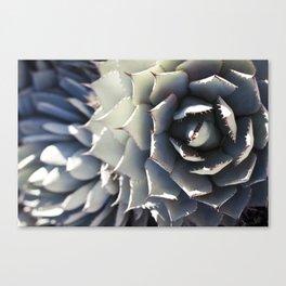 Agave Beauty Canvas Print