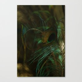 Peacock Sea Foam Canvas Print