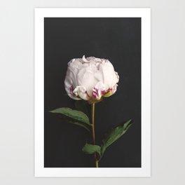Peony - simply perfect Art Print