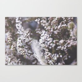 The Smallest White Flowers 01 Canvas Print