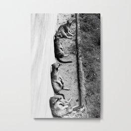 Row of meerkats Metal Print